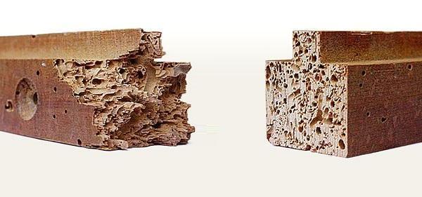 C mo eliminar la carcoma carpintero bilbao - Como combatir la carcoma ...